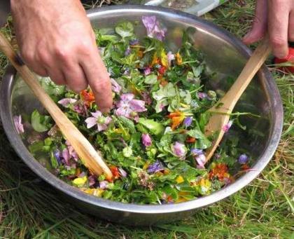 cuisine sauvage à la Maison de l'environnement @ Maison de l'environnement | Lyon | Auvergne-Rhône-Alpes | France